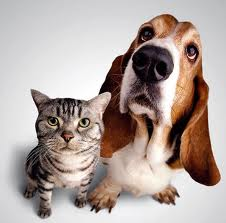 basset_and_cat